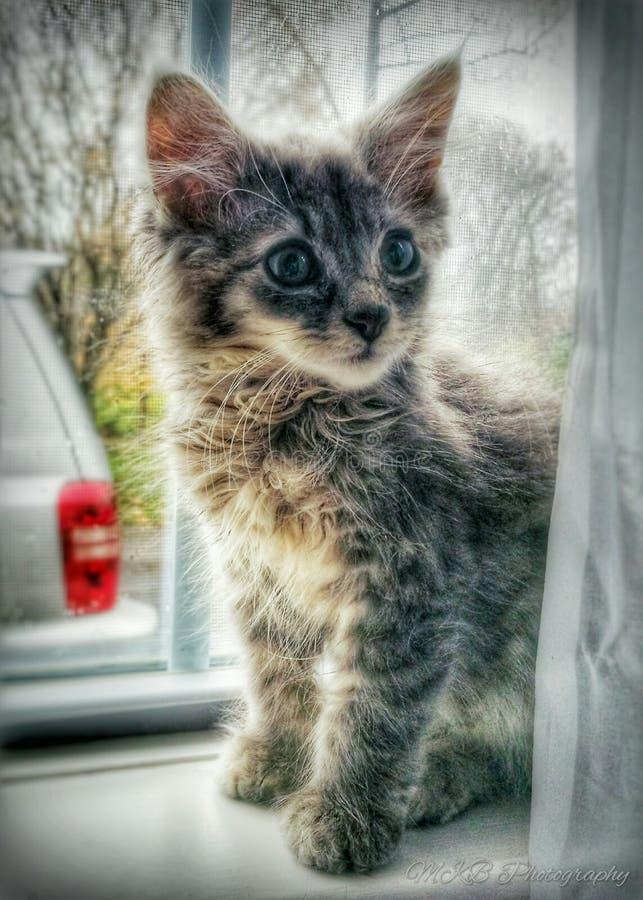 Gattino cat fotografia stock