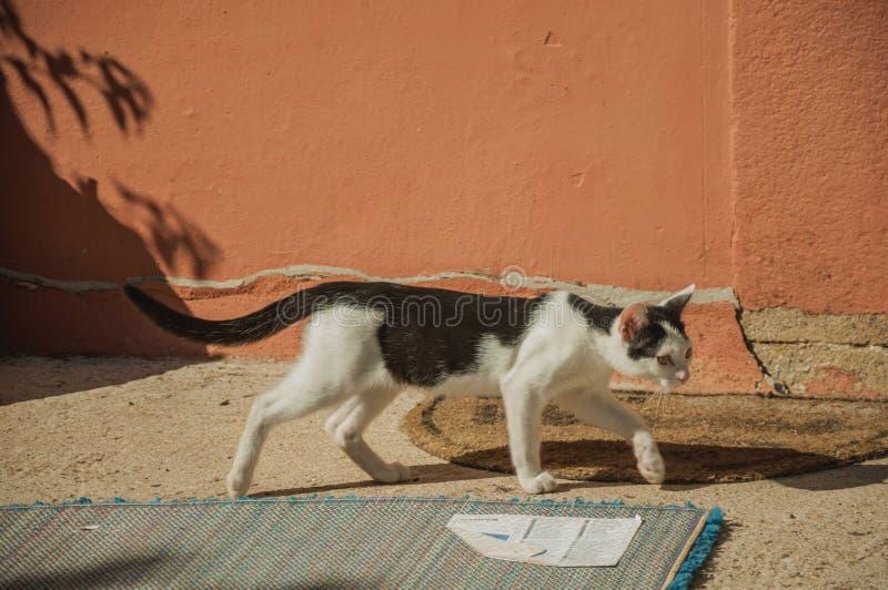 Gattino che cammina come in una caccia fotografie stock