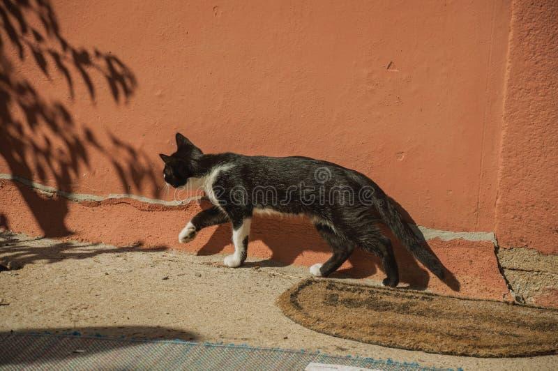 Gattino che cammina come in una caccia immagini stock
