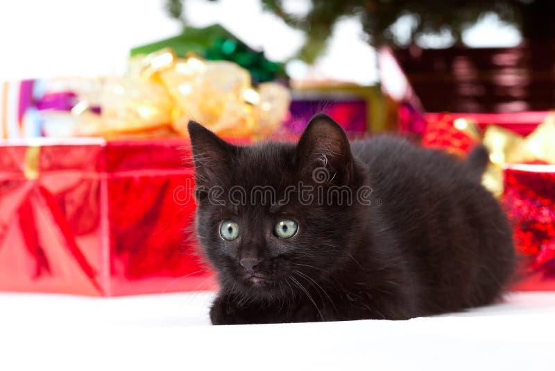 Gattino che dà una occhiata prima dei regali di natale immagine stock