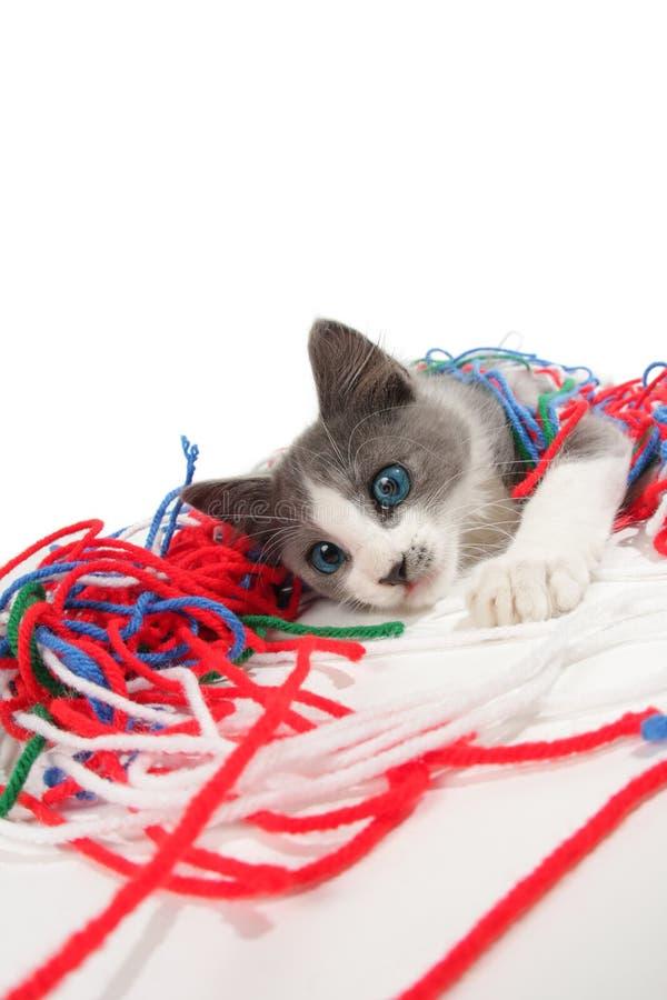 Gattino che gioca con il filato fotografia stock