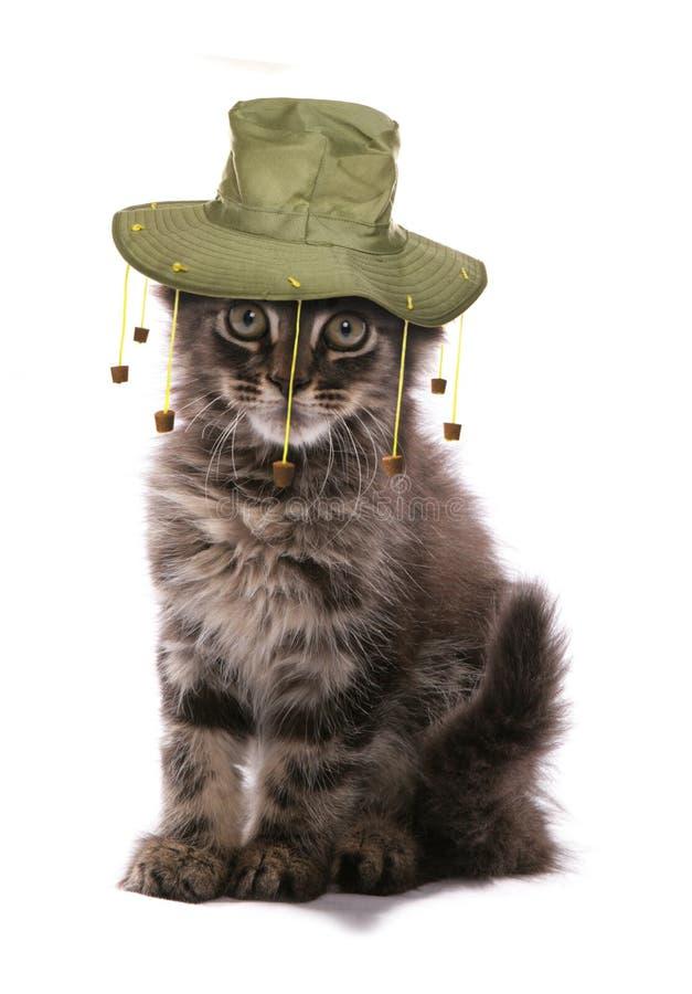 Gattino che porta il cappello australiano del sughero immagine stock