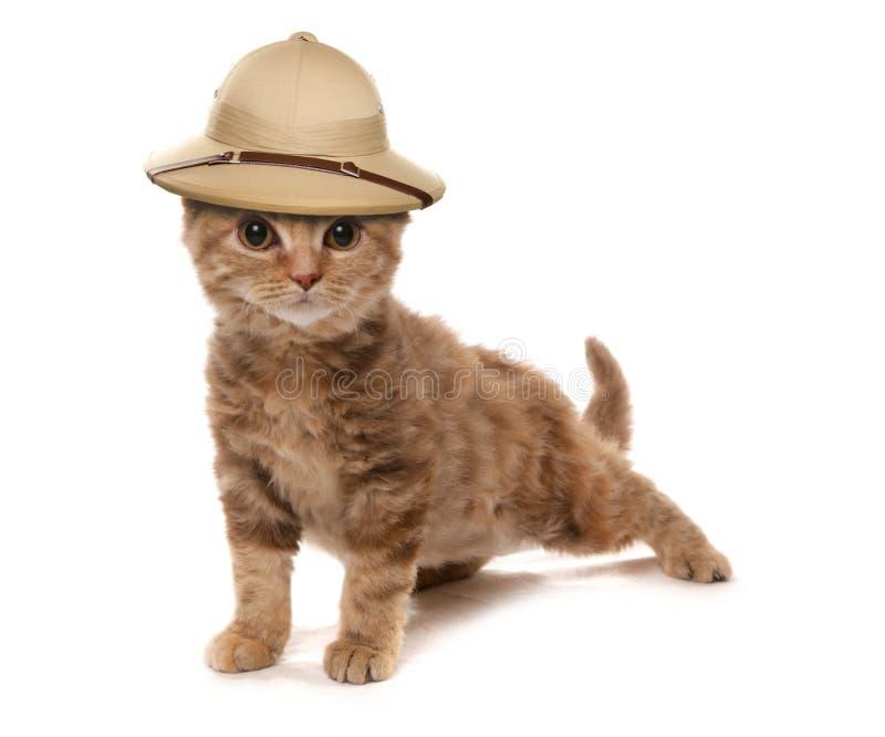 Gattino che porta un cappello degli esploratori della giungla del safair immagini stock libere da diritti