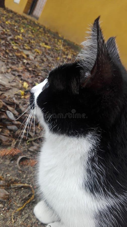 Gattino che posa per una foto immagine stock libera da diritti