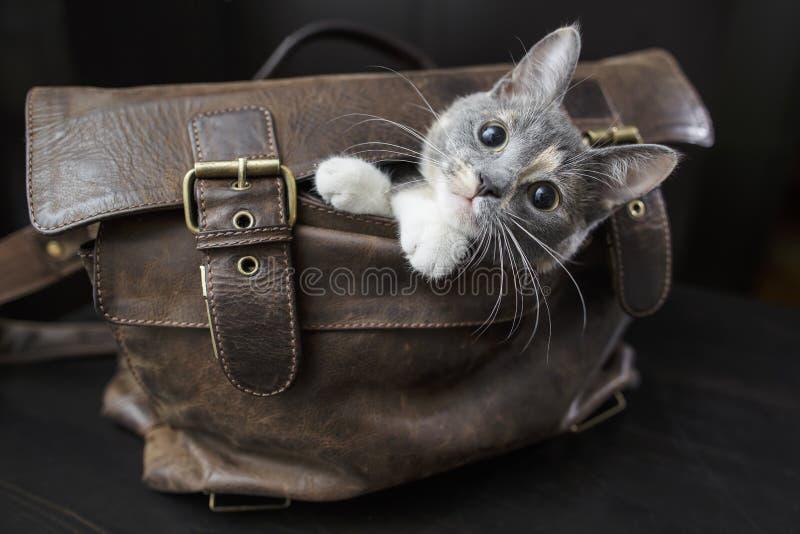 Gattino che si siede in una vecchia borsa di cuoio fotografia stock libera da diritti