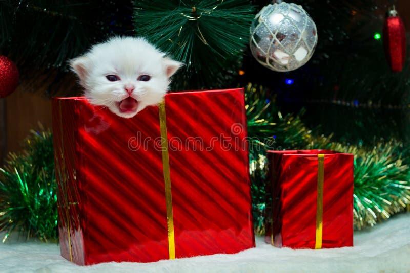 Gattino come regalo per il nuovo anno fotografie stock libere da diritti