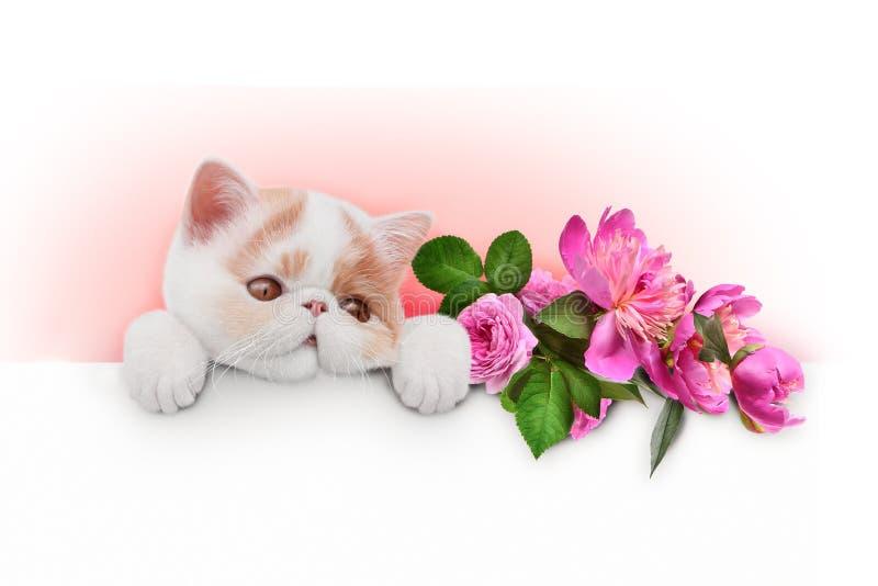 Gattino con i fiori immagini stock