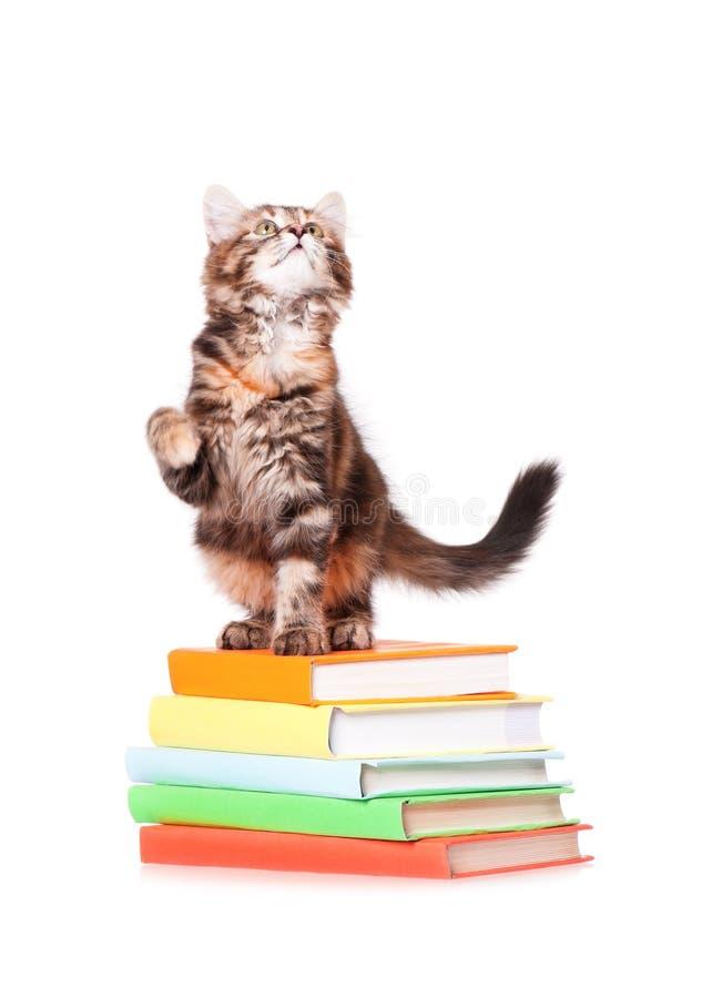 Gattino con i libri fotografia stock libera da diritti