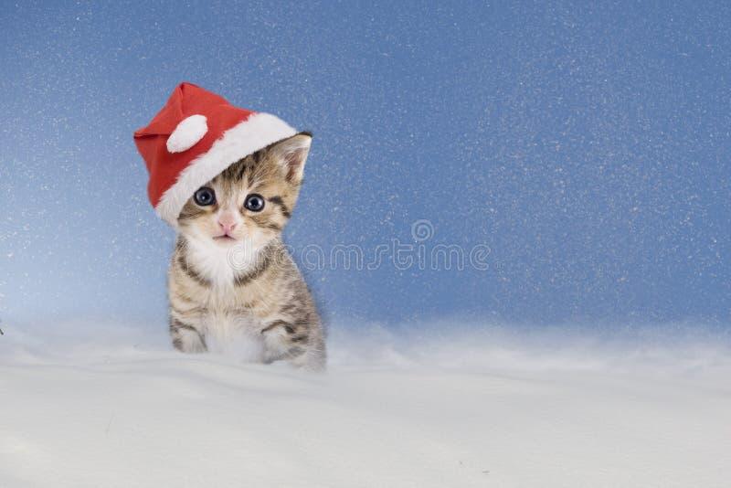 Gattino con il cappello di Natale che si siede nella neve fotografia stock