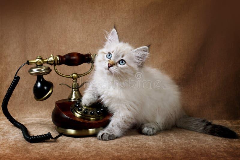 Gattino con il telefono fotografia stock
