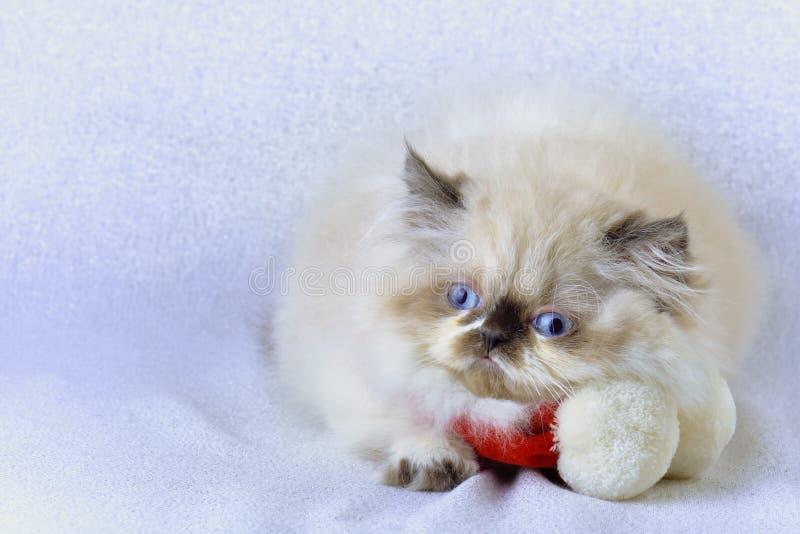 Gattino con una sciarpa fotografia stock
