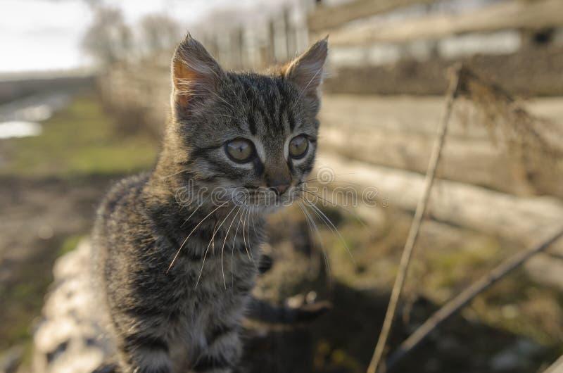 Gattino curioso fotografia stock libera da diritti