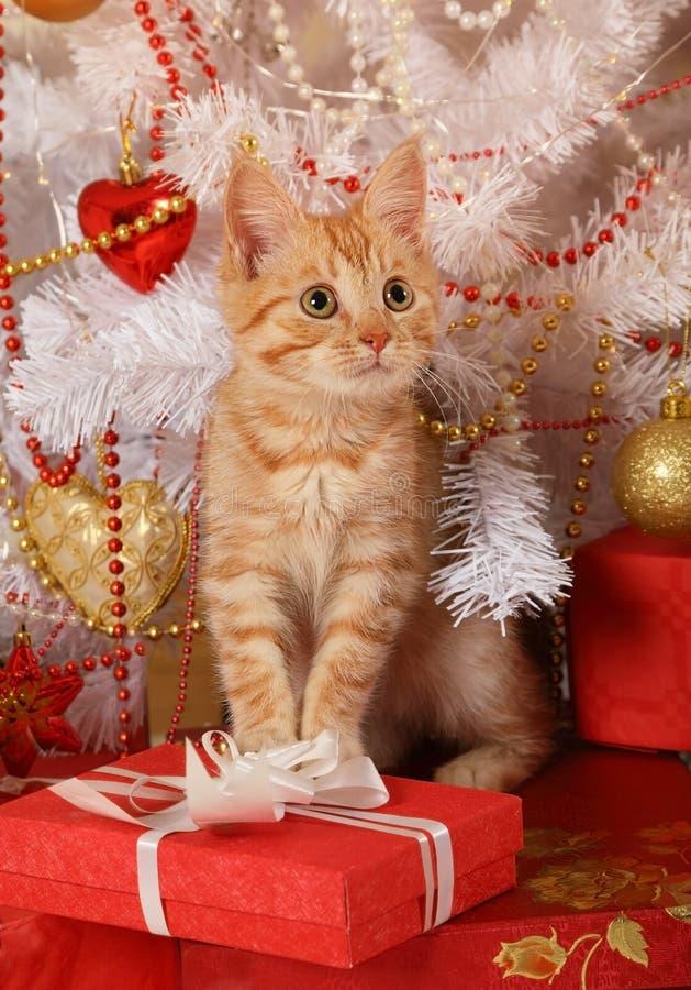 Gattino dai capelli rossi che si siede sotto l'albero di Natale fotografia stock