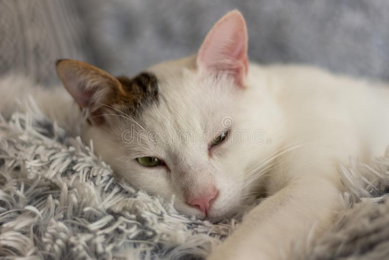 Gattino degli animali dei gatti della casa del gatto la mia bellezza del gatto dell'occhio verde dell'amico piccola come  immagini stock