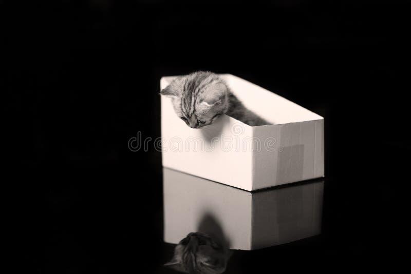 Gattino del bambino che si nasconde in una scatola di cartone fotografie stock