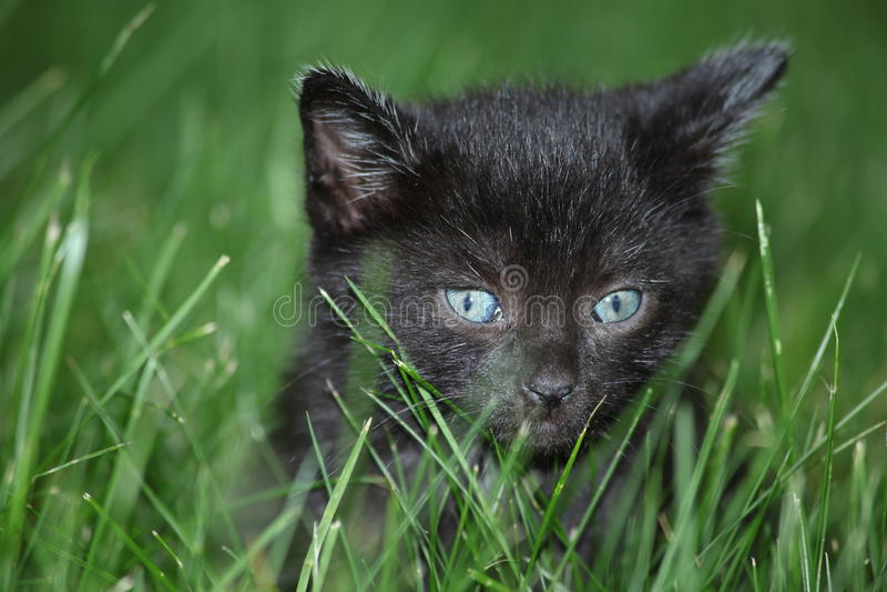 Gattino del bambino in erba fotografia stock