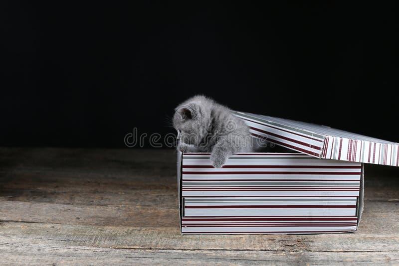 Gattino del bambino in una scatola di cartone fotografia stock libera da diritti
