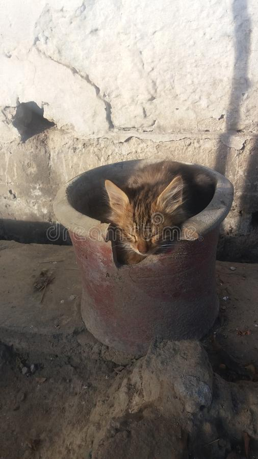 Gattino del gatto con il fronte arrabbiato immagine stock