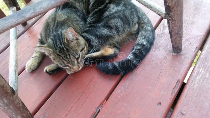 Gattino del nero di Brown fotografia stock