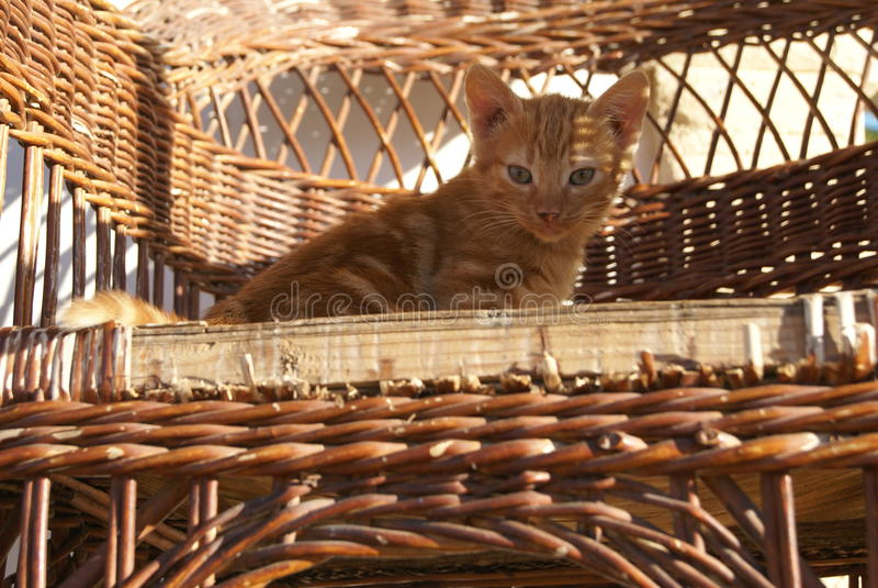 Gattino del soriano dello zenzero su una sedia di vimini su un patio immagini stock