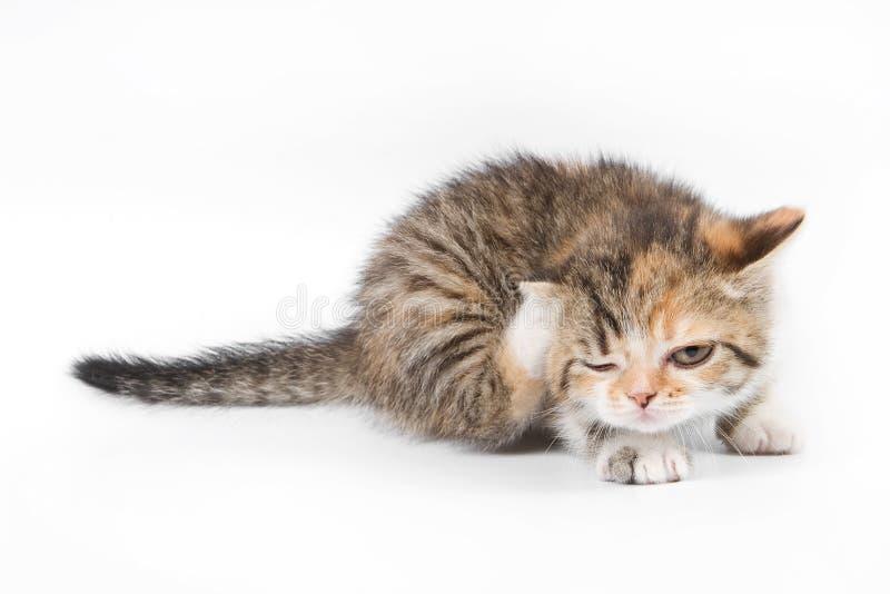 Gattino del Tabby immagine stock libera da diritti