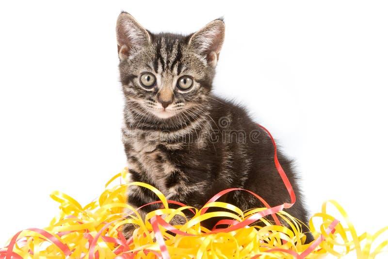 Gattino del Tabby fotografia stock