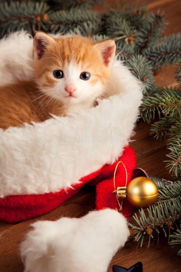 Gattino dello zenzero in cappello di Santa contro lo sfondo dell'Natale fotografia stock libera da diritti