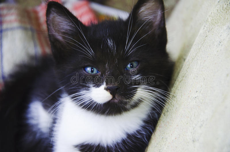 Gattino di Cutie immagini stock
