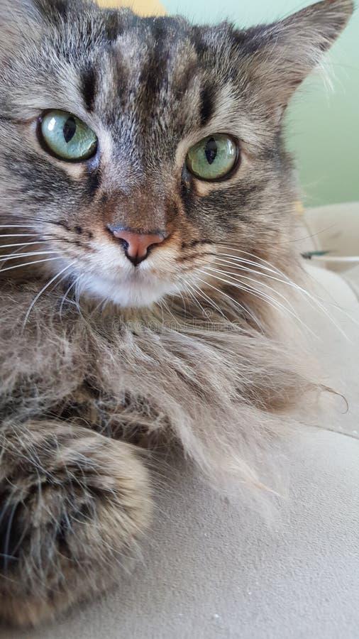 Gattino di Lucy fotografie stock libere da diritti