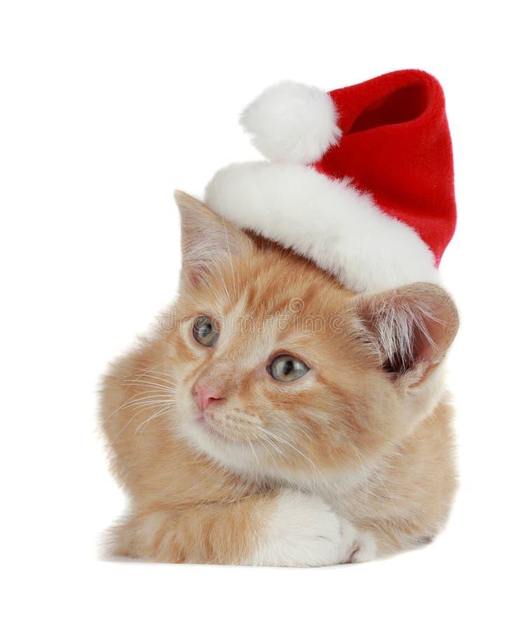 Gattino di natale immagini stock