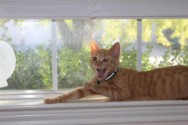 Gattino di sbadiglio fotografia stock