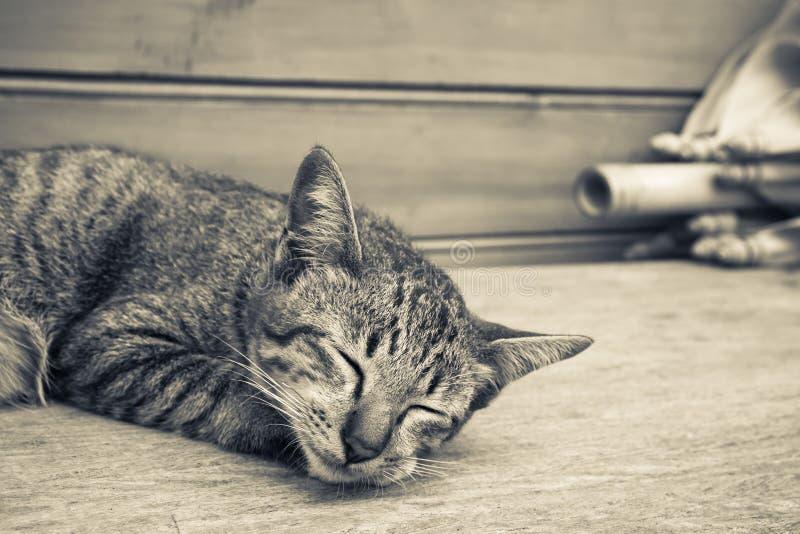 Gattino di sonno fotografia stock