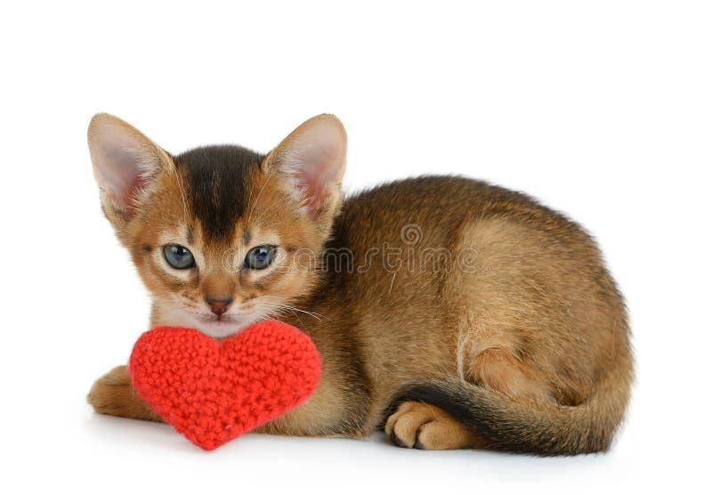 Gattino di tema del biglietto di S. Valentino con cuore rosso isolato immagine stock libera da diritti