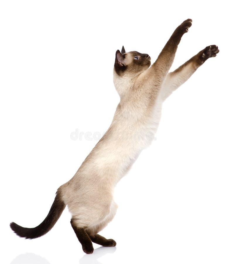 Gattino divertente allegro Isolato su priorità bassa bianca fotografie stock libere da diritti