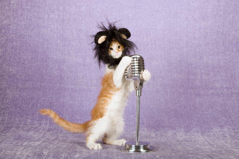 Gattino divertente comico che indossa parrucca animale simile a pelliccia nera con le grandi orecchie che tengono sul microfono f immagine stock libera da diritti