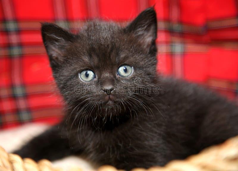 Gattino divertente del gatto del bambino in canestro di vimini fotografie stock libere da diritti