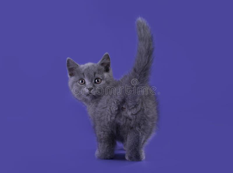 Gattino divertente su un fondo isolato immagine stock