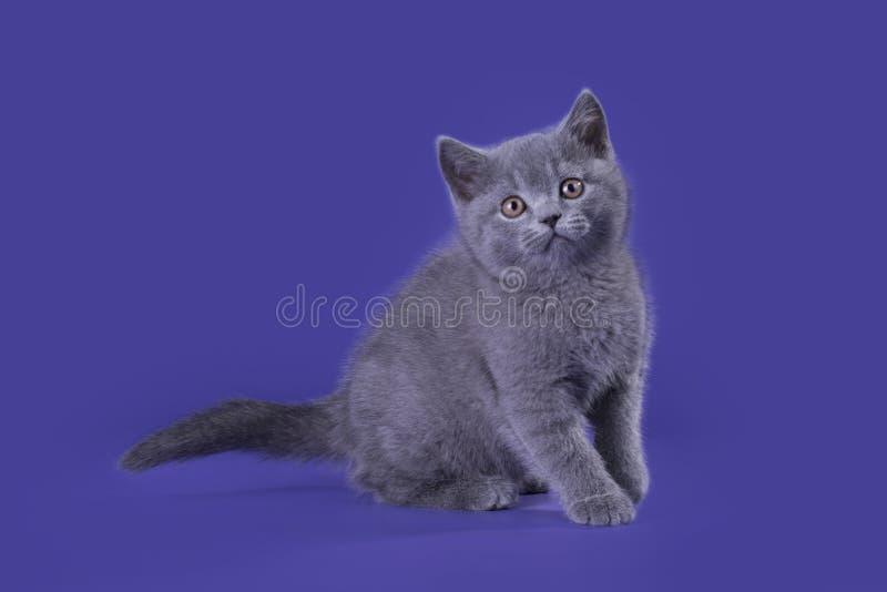 Gattino divertente su un fondo isolato fotografia stock libera da diritti