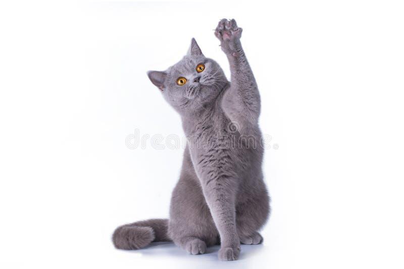 Gattino divertente su un fondo isolato fotografie stock