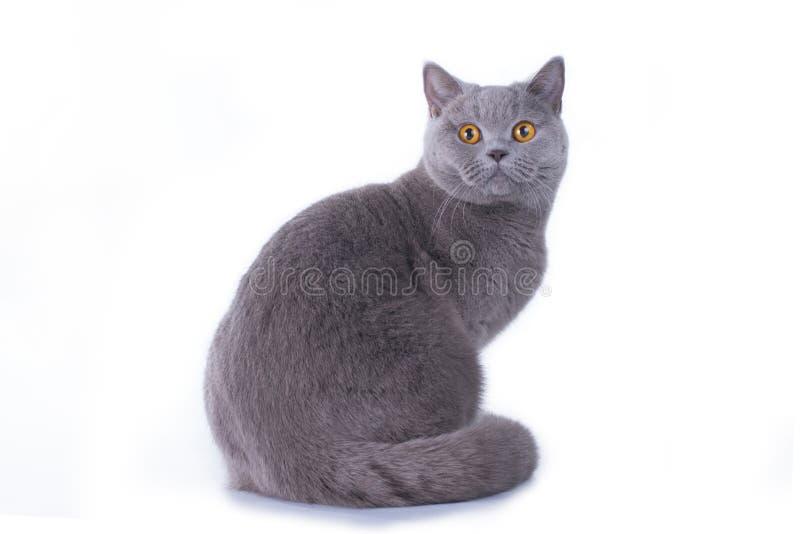 Gattino divertente su un fondo isolato fotografia stock