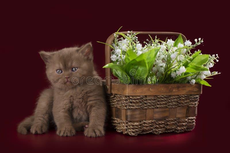 Gattino divertente su un fondo isolato immagini stock