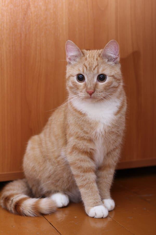 Gattino divertente su un pavimento vicino ad una tavola fotografie stock libere da diritti
