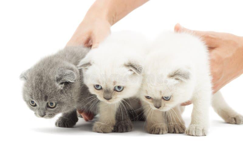 Gattino divertente tre immagine stock
