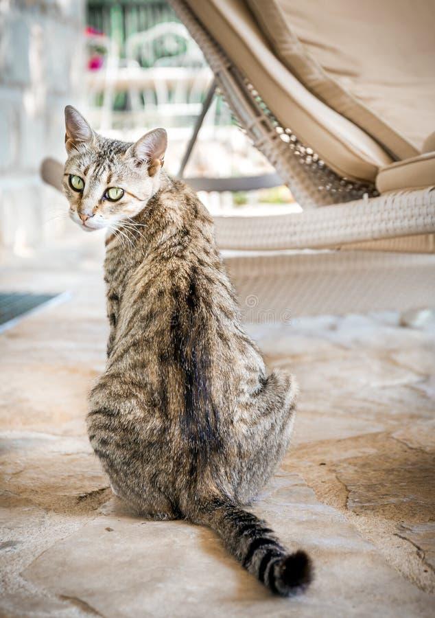 Gattino domestico sveglio fotografia stock libera da diritti