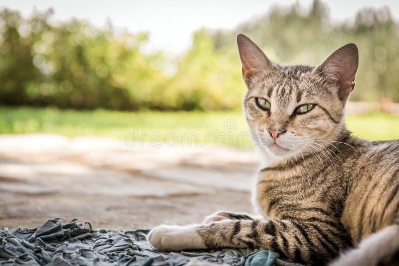 Gattino domestico sveglio fotografie stock