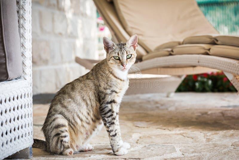 Gattino domestico sveglio immagini stock