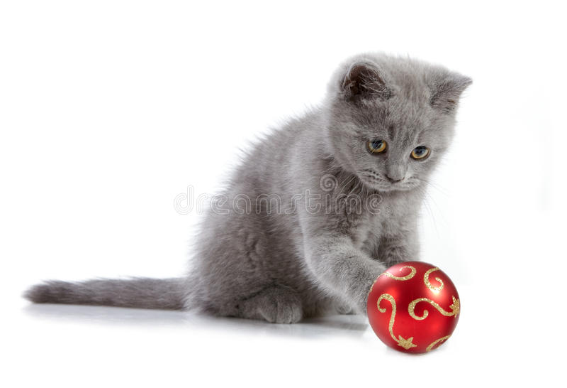 Gattino e bagattella di natale immagini stock
