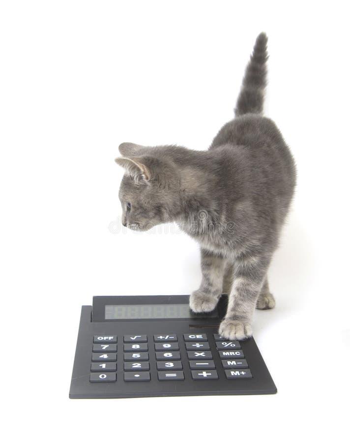 Gattino e calcolatore immagine stock