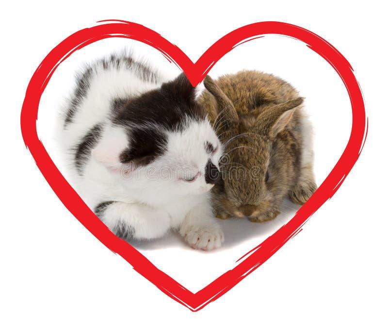 Gattino e coniglietto nel cuore fotografia stock libera da diritti