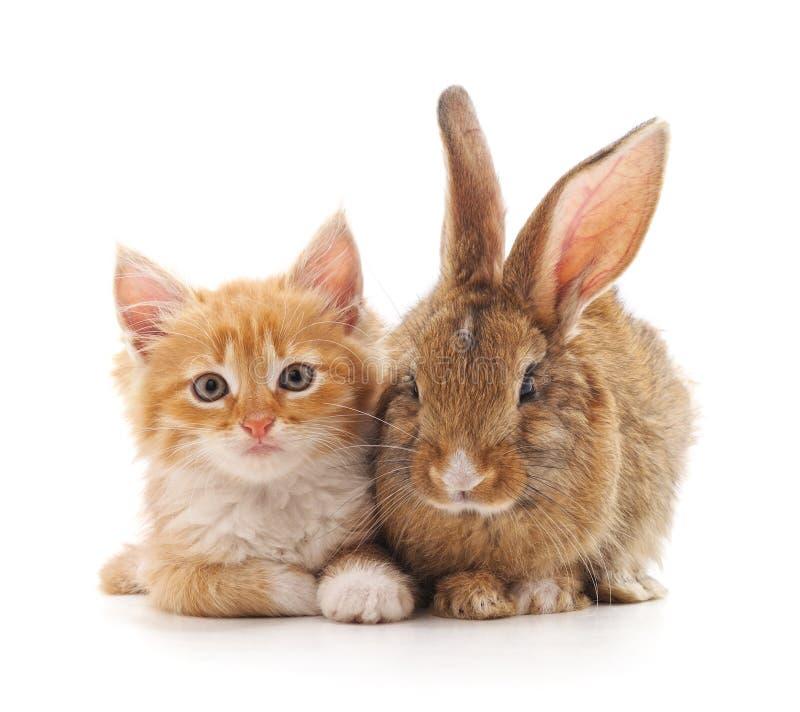 Gattino e coniglietto rossi fotografia stock libera da diritti